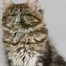 An image of semibeard