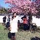 An image of sun_flowerry